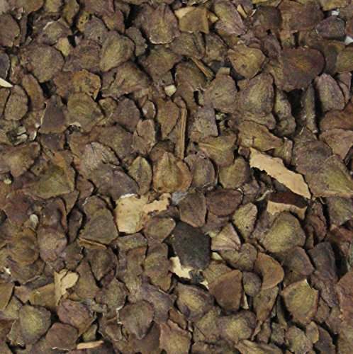 50 Jacaranda Bonsaï Seed pack flamboyant bleu