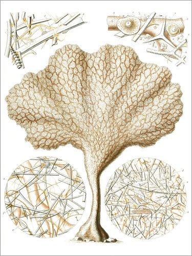 Póster 70 x 90 cm: Reportonscien de Ernst Haeckel - impresión artística, Nuevo póster artístico