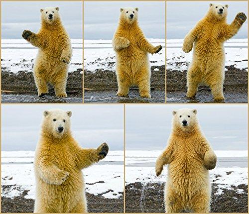 EISBÄR/POLARBÄR Lustige Lentikular-Postkarte mit Wechselbild/Flip eines tanzenden Eisbären von Edition Colibri (10223)