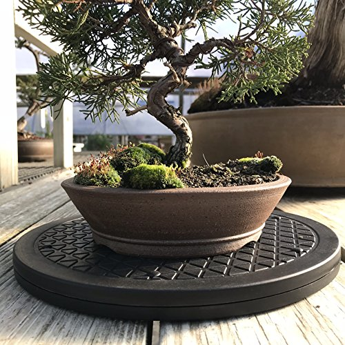 "Mighty Mini Bonsai Tree Turntable 12.5"" Base Stainless Steel Ball Bearings. Low Cost 200-Pound Capacity 360-Degree Rotation Allows Easy Pruning Or Great Bonsai Tree Displays"