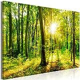 decomonkey | Mega XXXL Bilder Wald Baum | Wandbild Leinwand