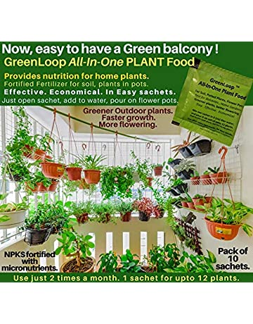 Plants Store Buy Plants Online At Best Prices In India Browse List Of Plants At Amazon In