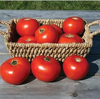 David's Garden Seeds Tomato Slicing Mountain Fresh Plus SL9876 (Red) 25 Non-GMO, Hybrid Seeds