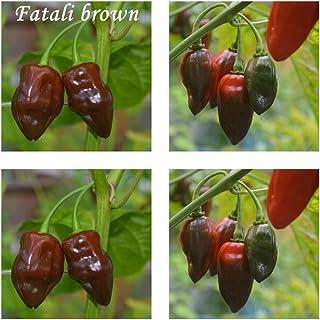 Fatali marrón - 20 semillas de chile - Gravedad: 10 ++ !!