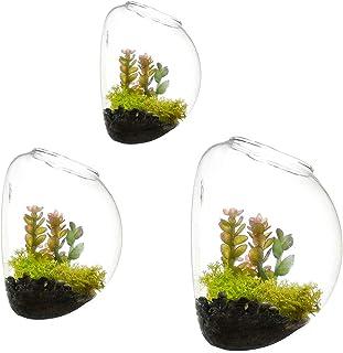 Juego de 3 jarrones de vidrio de pared, terrarios de pared de burbujas, terrarios de vidrio soplado, macetas de interior, soportes para plantas de aire, macetas de pared suculentas (sin plantas)