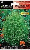 semi di fiori - kochia tricophylla - cipresso estivo - batlle