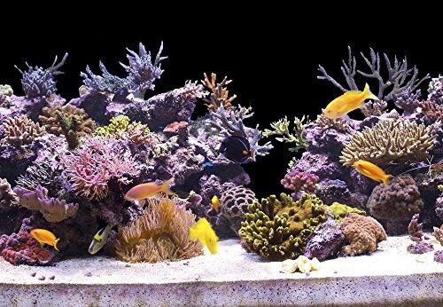 StickandShine 200 cm Aquarium Hintergrund Folie schwarz 60 cm breite/höhe