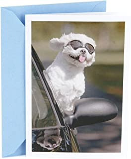Hallmark Shoebox Funny Birthday Card (Dog in Car)