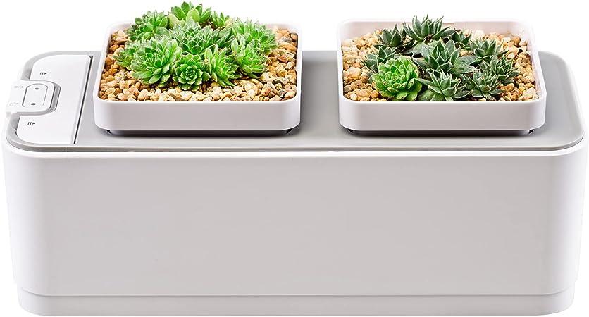 Staright Sistema de cultivo hidropônico Plantador de mesa interna Lembrete de escassez de água 2 vasos de plantas sem solo para jardinagem de ervas de flores de vegetais em casa : Amazon.com.br: Jardim e Piscina