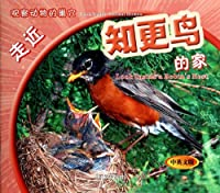 Look Inside a Robins Nest(Chinese Edition)