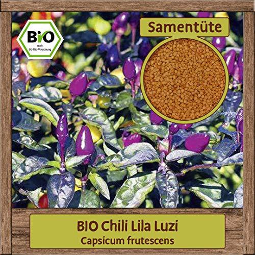 BIO Chili Samen Sorte Lila Luzi (Capsicum frutescens) Gemüsesamen Chili Saatgut