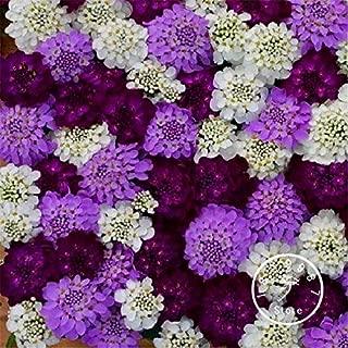 WANCHEN 100 Pcs/Bag Loss Promotion!Iberis Evergreen Brilliant Flash Flower Flores/Deer Resistant Garden Decoration Bonsai Flower pla (Seeds not Plants)