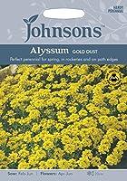 JOFL 英国ジョンソンシード Alyssum saxatile Gold Dust アリッサム・サクサテイル・ゴールド・ダスト