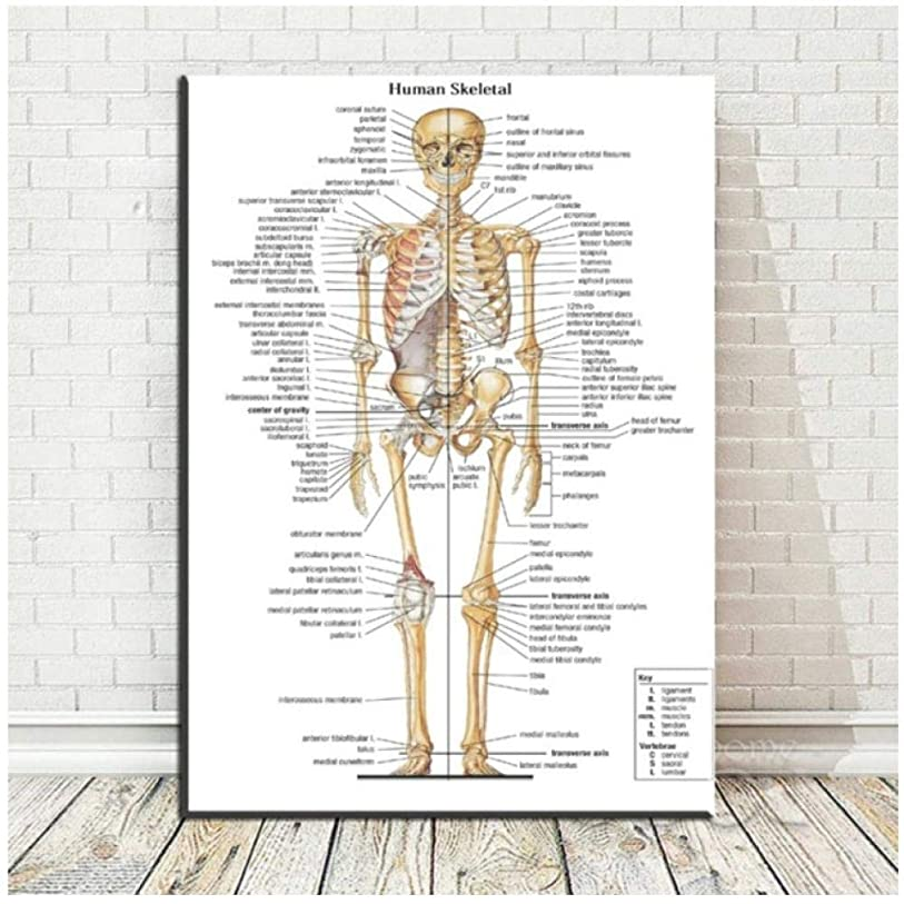 スクラッチ常に創傷キャンバス絵画壁アート画像人間骨格解剖体の骨ポスター印刷医療マップ用ボディマップ写真-60×80センチ(フレームなし)
