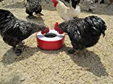 keeping chicken water from freezing with solar power