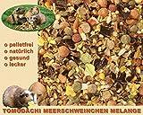 Meerschweinfutter pelletfrei, Nagerfutter, natürliche Nagerfuttermischung mit Möhrenflocken, Erbsenflocken, Erdnüssen, Sonnenblumenkernen, Kardi, Maisflocken und Kräutern – leckerer bunter Knabbermix, Alleinfutter für Meerschweinchen, Rundum-Sorglos Futtermischung Tomodachi Meerschweinchen Melange 5kg Eimer - 5