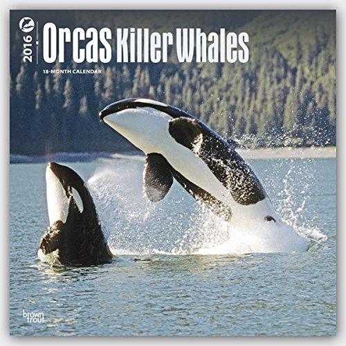 Orcas 2016 - Killerwale - 18-Monatskalender: Original BrownTrout-Kalender [Mehrsprachig] [Kalender]