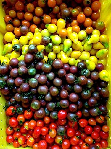 50 graines de tomates cerises semences (TousTrier Mix) Au-delà de la base Rouge Tomate cerise bio