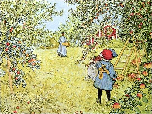 Posterlounge Leinwandbild 70 x 50 cm: Apfelernte von Carl Larsson/Bridgeman Images - fertiges Wandbild, Bild auf Keilrahmen, Fertigbild auf echter Leinwand, Leinwanddruck