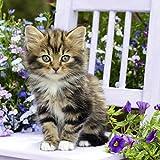 20 Servietten Kitty - Süße Katze auf Stuhl/Tiere / Tiermotiv 33x33cm