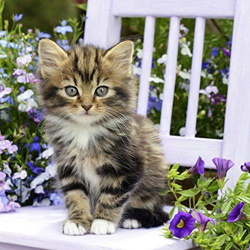 20 Servietten Kitty - Süße Katze auf Stuhl/Tiere/Tiermotiv 33x33cm