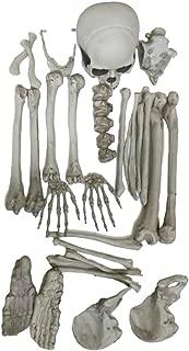 MonkeyJack Resin Artificial Skeleton Head Bone for Holloween Bar Aquarium Decortion