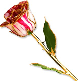 Allmygold Jewelers Peppermint Long Stem 24K Gold Dipped Genuine Rose