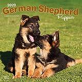 German Shepherd Puppies - Deutsche Schäferhunde - Welpen 2020 - 16-Monatskalender mit freier DogDays-App: Original BrownTrout-Kalender [Mehrsprachig] [Kalender] (Wall-Kalender)