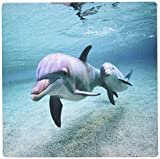 3dRose Image of Mama and Baby Dolphins Underwater Mouse Pad (mp_174377_1)