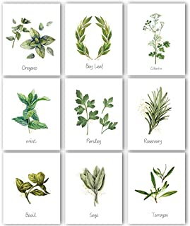 Kitchen Herbs Art Prints - Botanical Prints | Set of 9 Photos 8x10 Unframed | Great Kitchen Decor and Gift for Nature Lovers