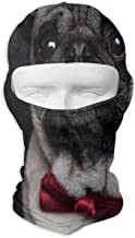Balaclava Pug Studio Photos Full Face Masks UV Protection Ski Hat Cap Motorcycle Hood For Cycling Hiking Women Men