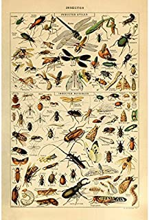 Vintage Poster Print Art Insects Identification Reference Species Collection Entomology Diagram Chart Wall Decor (20.87'' x 31.5'')