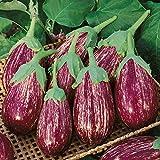 David's Garden Seeds Eggplant Shooting Stars 1315 (Purple) 200 Non-GMO, Open Pollinated Seeds