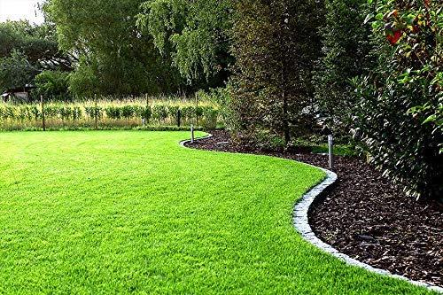 Portal Cool 100Pcs Green Grass Rasensamen Villa Hof Pflanze Baum Dekor Günstige Blumentopf