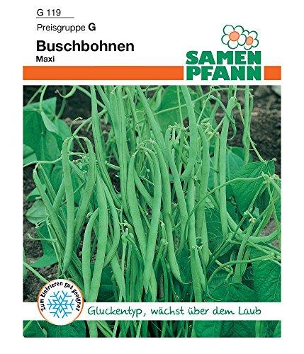 Samen Pfann G119 Buschbohne Maxi (Buschbohnensamen)