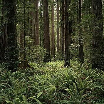 Rainforest White Noise Rain