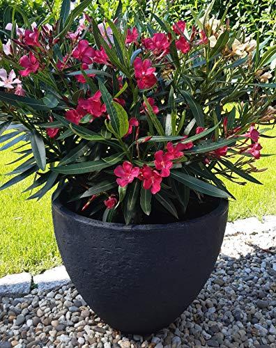 Garten Deko Blumenkübel XXL, Blumentopf, Pflanzkübel, Pflanztopf in RUND für Terrasse, Balkon, Wintergarten für Ihre Sommerblumen oder Oleander, Olivenbaum, Zitrospflanzen in Schwarz- Anthrazit