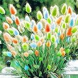 Color Mix 100 Pcs /Bag Rabbit Tail Grass Seeds Ornamental Grass Seeds Garden Seeds Flowers Light Up Your Garden Easy to grow