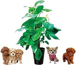 ウォールステッカー 犬 壁紙シール ウォール ステッカー 鉢植え 大きサイズウォールスタッカー 動物 50*70cm