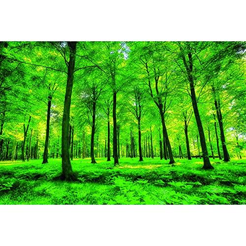 GREAT ART Mural De Pared – Árboles – Naturaleza Paisaje Puro Bosque Claro Relajación De Verano Planta De Sol Flora Bosque Helechos Rama Foto Tapiz Y Decoración (336 x 238 cm)