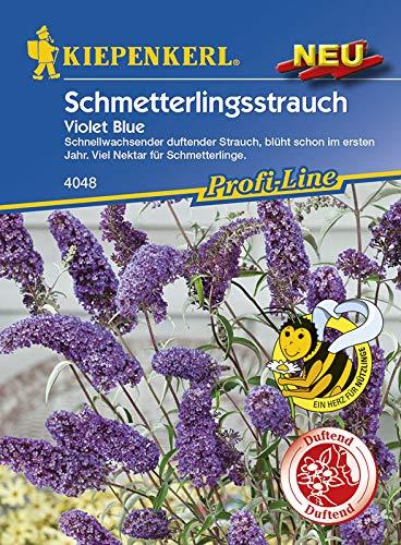 Schmetterlingsstrauch Violet Blue
