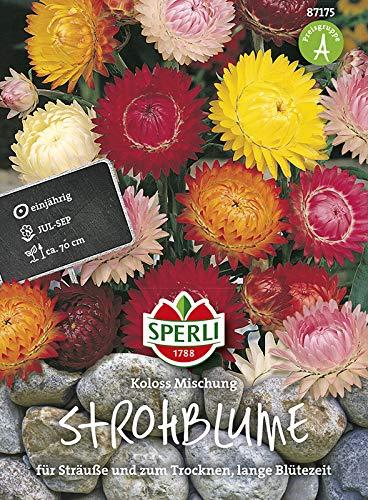Sperli-Samen Strohblumen SPERLI's Koloss Mischung
