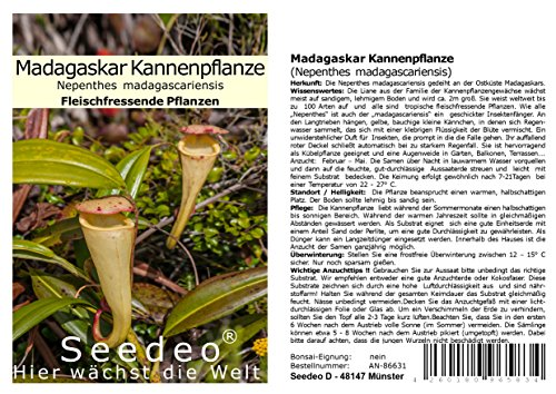 Seedeo® Madagaskar Kannenpflanze (Nepenthes madagascariensis) 20 Samen inkl. Anzuchtsubstrat