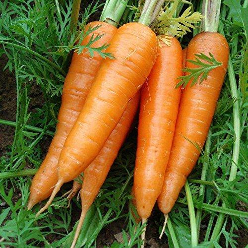 1000/Sac sain Fruits bio Légumes carotte Jardinerie Famille Graines bio en pot Livraison gratuite