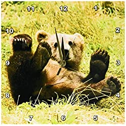 3dRose DPP_43744_1 Baby Grizzly Bear-Wall Clock, 10 by 10-Inch