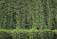 Qinunipoto 背景布 背景紙 背景紙 撮影用 布 バック紙 背景ボード 写真用 背景 公園の壁 ツタの葉 春の屋外 生活写真 新生児 背景ポスター 自宅用 写真 撮影用背景紙 写真背景布 ビニール 撮影布 1.5x1m
