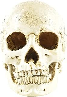 ENNAS 1:1 Resin Skull Head Model Simulation Skeleton Head Medical Skull Art Copy for Halloween Decor