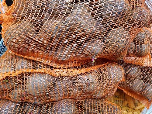 Hof Lücken frische rote Bete Knollen 10kg
