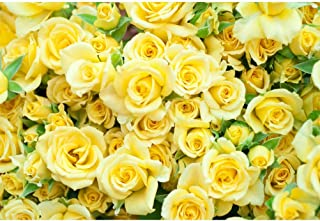 Laeacco 10x8ft Graceful Yellow Rose Flower Wall Vinyl Photography Backdrop Wedding Photo Background Bridal Shower Banner Bride Portraits Shoot Props House Decoration Wallpaper Greeting Card