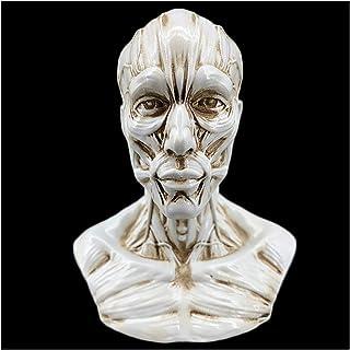Mini Human Muscle Head Drawing Mannequin Model - 10Cm High Anatomy Skull Head Muscle Bone Medical Model - for Artist Drawi...